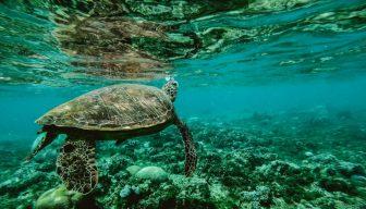 """""""Catástrofe humanitaria sin precedentes"""" si no cuidamos el océano, según ministra sueca"""