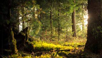 Universidad de Helsinki: bosques crecen más en países de ingresos altos